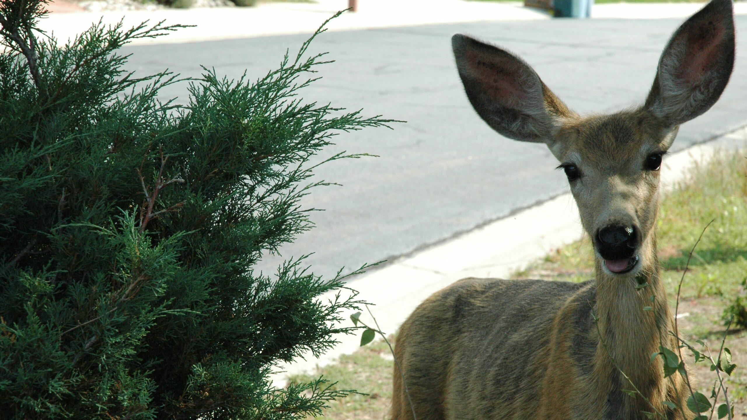 Confused look on the deer.